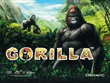 игровой автомат Gorilla / Горилла